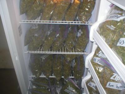 Гроу совет: холодильник в помощь!