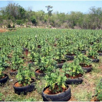 Поиск места для выращивания