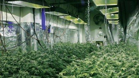 Выращивание марихуаны внутри помещения