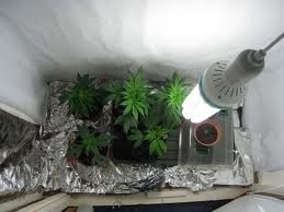 Какая лампа нужна для выращивания 118