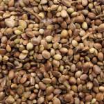 1361880396_marijuana-seeds.jpg