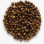 1388604277_marijuana-seeds-.jpg