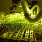 1401041716_hydroponics.jpg