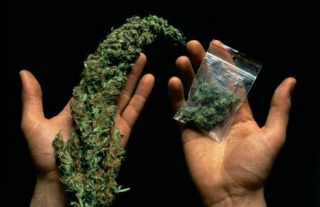 Происхождение и эволюция сортов семян марихуаны
