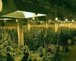 Роль магния в росте марихуаны