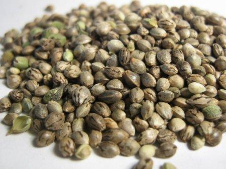 Безопасный способ хранения семян марихуаны