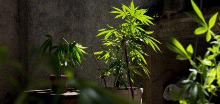 Контейнеры для выращивания марихуаны
