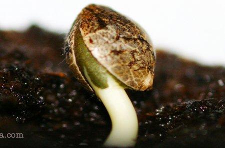 Как прорастить семена в почве?